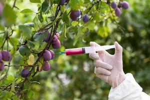 frutas geneticamente modificadas foto