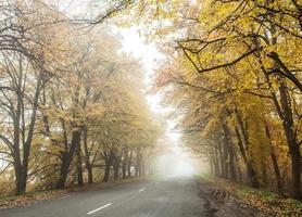 estrada de outono nevoenta.