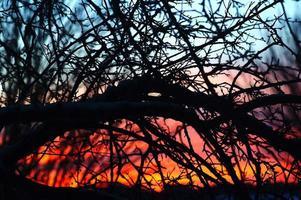 crepúsculo através dos ramos: pôr do sol colorido volta iluminado árvore