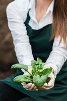produção de alimentos biológicos. foto