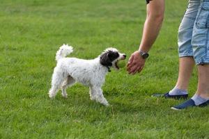 cachorro alegre brincando com bola