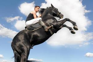 cavalo de criação foto