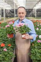 alegre velho trabalhador de jardim está plantando flores