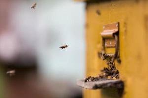 abelhas voando ao redor de sua colméia