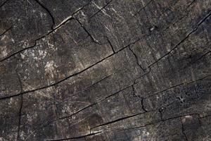 madeira velha