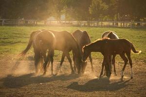 cavalos em pó