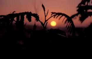 pôr do sol big sur califórnia foto