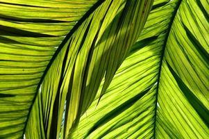 folhas verdes em contraluz foto
