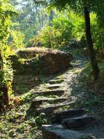grandes degraus de pedra cercados por árvores