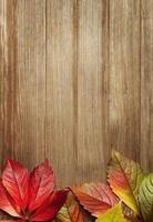 folhas de outono com espaço de cópia foto