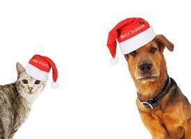 cão e gato com espaço de cópia foto