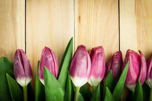tulipas em um fundo de madeira. copie o espaço