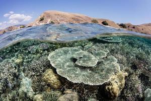 recife de coral saudável e ilha no parque nacional de komodo
