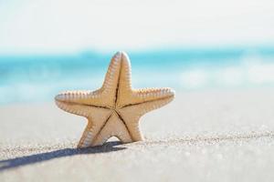 estrela do mar à beira-mar. conceito de verão com espaço de cópia. foto