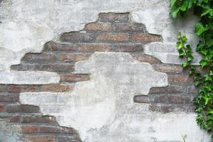 parede de cimento tijolo velho com espaço de cópia vazia de árvore de Hera foto
