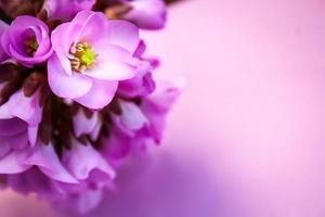 fundo de cartão de flores cor de rosa