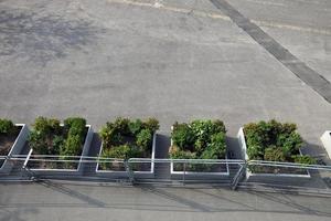 baldes de flores urbanos foto