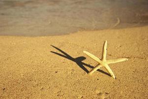 estrela do mar na praia