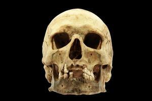 crânio humano genuíno foto