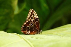 borboleta close-up - série foto
