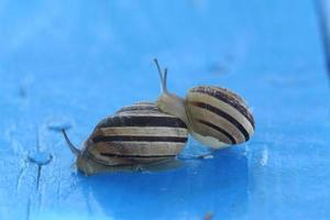 dois caracóis, close-up foto