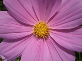 close-up de flor roxa foto