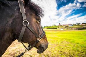 cavalo puro-sangue close-up foto