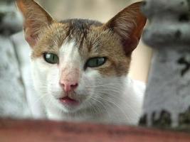 cara de gato de perto foto