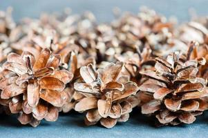 close-up de cone de abeto foto