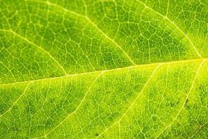 close-up de folha verde