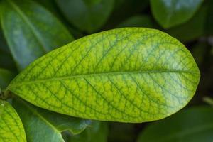 close de folha de arbusto foto