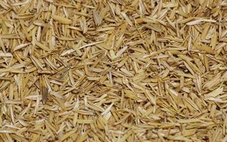 casca de arroz close-up foto