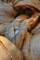 casca de coco close-up foto