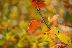 cores de outono de perto