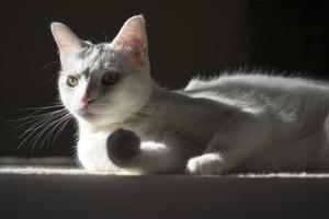 banho de sol e gato gatinho relaxante foto