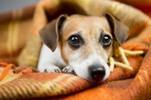 cachorro relaxamento e conforto foto