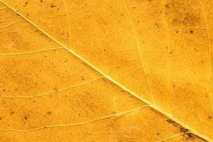folha de outono fechar