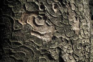 close-up de casca de árvore