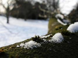 gelo na árvore foto