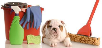 casa treinando um filhote de cachorro