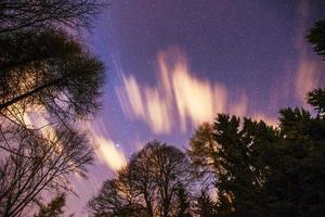 céu estrelado através das árvores foto