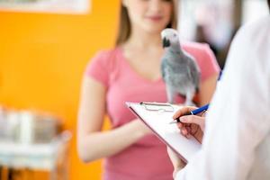 transcrevendo terapia para papagaio doente em enfermaria veterinária foto