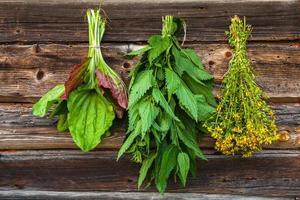 ervas medicinais foto