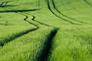 padrões de colheita foto