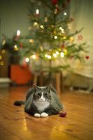 gato debaixo da árvore de natal foto