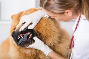clínica veterinária foto