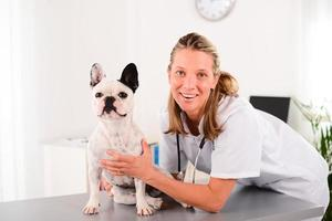 alegre jovem loira veterinária cuidando do cachorro bulldog francês foto