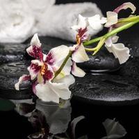 conceito de saúde da flor da orquídea cambria com gotas foto