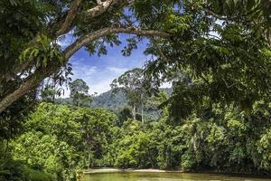 lagoa na selva