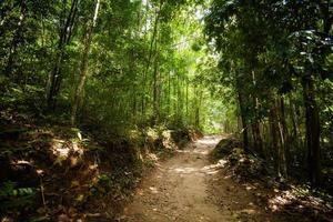 trekking na selva em koh phangan foto